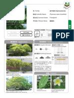 14 Plumeria Rubra Acutifolia
