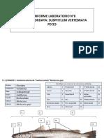 Informe 8 Peces.pptx.pdf