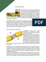 Guia 2 Alimentos Transgenicos.pdf
