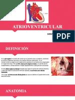 canal atrioventricular expo cardio