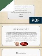 ENSAYO DEL EMBARAZO Y ABORTO.pdf