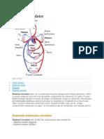 Sistemul circulator.pdf