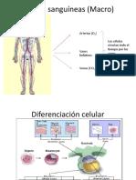 vocacional-inmune (1).pptx