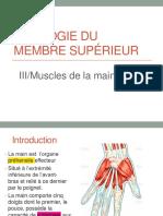 3-Muscles de la main