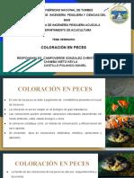 Coloración de peces_3
