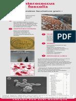 Enterococcus y Staphylococcus (1)