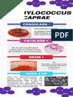 Enterococcus y Staphylococcus