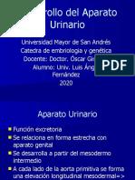 Aparato-Urinario EMBRIOLOGIA