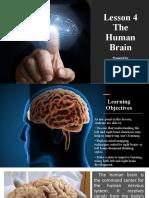 Lesson 4 The Human Brain