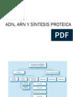 02-ADN, ARN y sintesis proteica