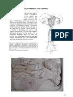 Apostila Aparelho Reprodutor Feminino.pdf