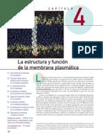 Capitulo 4 Membrana plasmatica