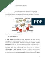 Tecidos Epitelial e conjuntivo.pdf