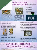 DIAPOSITIVAS ANIMAL II.pptx