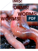 last chance worms