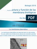 Tema 3 Membrana Plasmatica estructura funcion