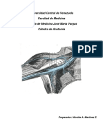 Drenaje venoso Miembro superior.pdf
