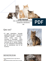 PRESENTACION LOS GATOS 2