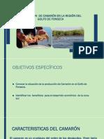 Análisis de la producción de Camarón en la Región del Golfo de Fonseca