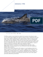 scheda-delphinus-delphis