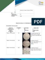 Anexo entrega informe prácticas  Biología (1) camila cortes