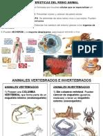 1ESO.T8. ANIMALES VERTEBRADOS
