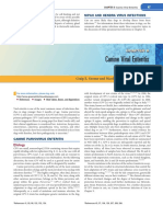 parvovirus.pdf