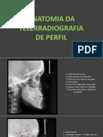 Anatomia Teleperfil