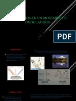 Fenomenos en un movimiento ondulatorio