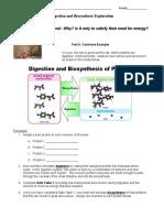 15_digestion___biosynthesis_exploration (2).docx