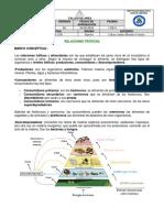 TALLER-DE-AREA-redes-troficas-1