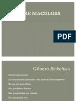 maculosa