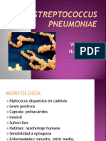 130013868-Streptococcus-Pneumoniae