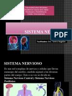 Sistema nervioso parte 1 ( muro).pptx