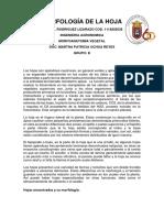 Informe morfologia de la hoja.