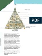 Ficha 4 - A sociedade, a religião e o saber egípcios