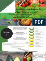 Cambios morfologicos durante madurez y senescencia [Autoguardado] 2 (1)