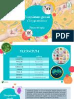 TOXOPLASMA.pptx
