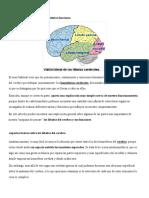 Los 5 lóbulos del cerebro y sus distintas funciones