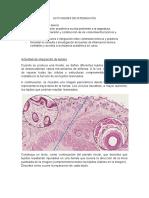 Actividad de integración 1 histologia