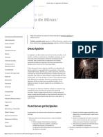 ¿Qué hace un Ingeniero de Minas_.pdf