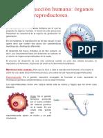 Reproducción Humana.doc