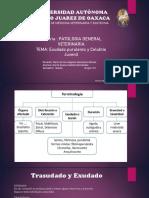 CELULITIS JUVENIL -Exudado purulento.pdf