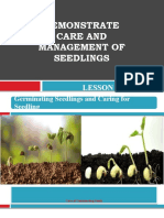 care of seedlings