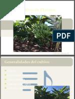 ppt-platano-yuca
