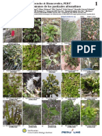 1031_peru_common_plants_of_los_pastizales_altoandinos.pdf