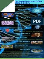 Anexo No. 1  Infografía Niveles de Organización Biológica.pdf