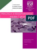 2752-eq7-hemoparasitos
