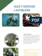 animales en extincion.pptx