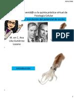 P5 en línea a.pdf